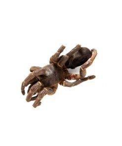 Tarantula cebra Eat Crawlers producto